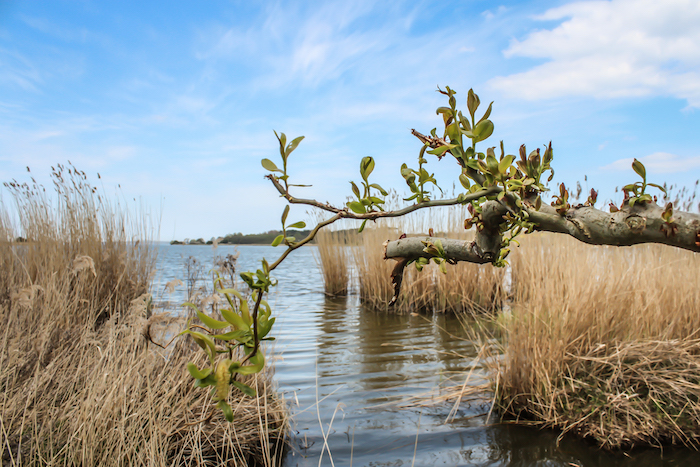 Landschaft Insel Safari Usedom