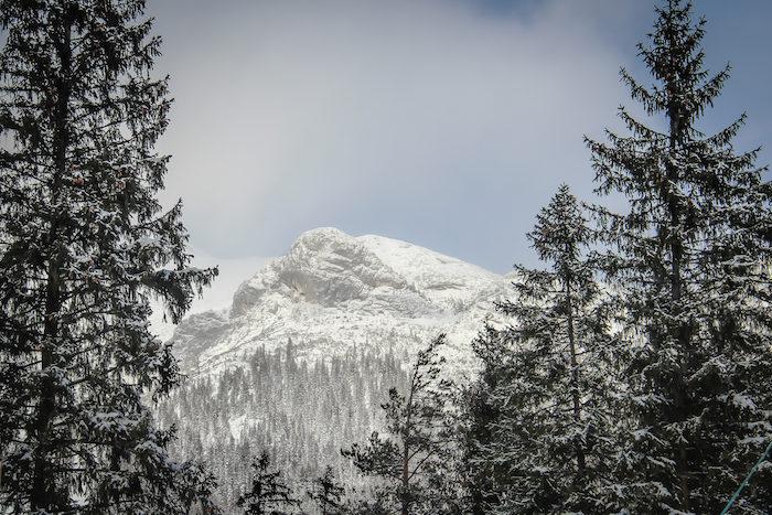 Achensee Steinberg am Rofan Wald
