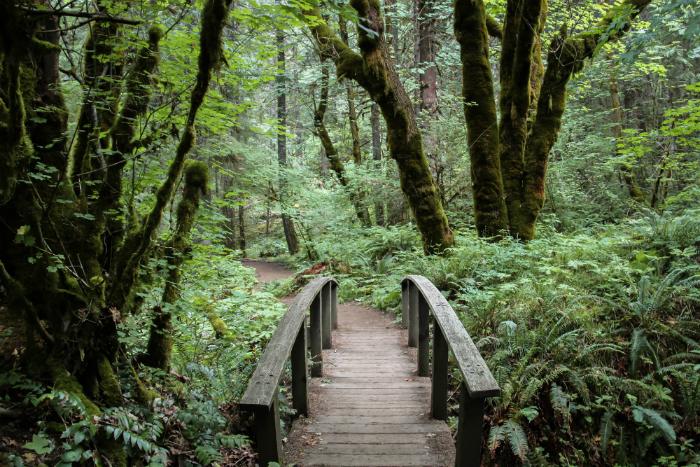 Toketee Falls Oregon Roadtrip_