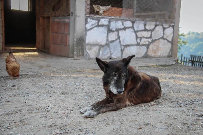 SkodaEuroTrek Hund