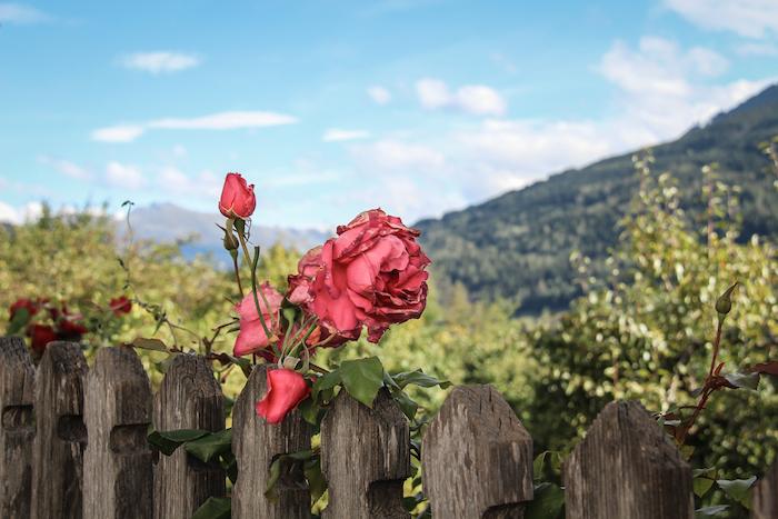 Stanz in West Tirol