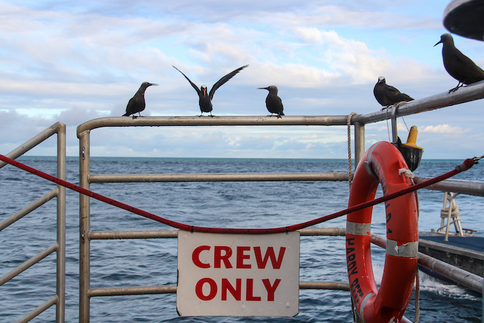 Reefsleep Reefworld Crew only