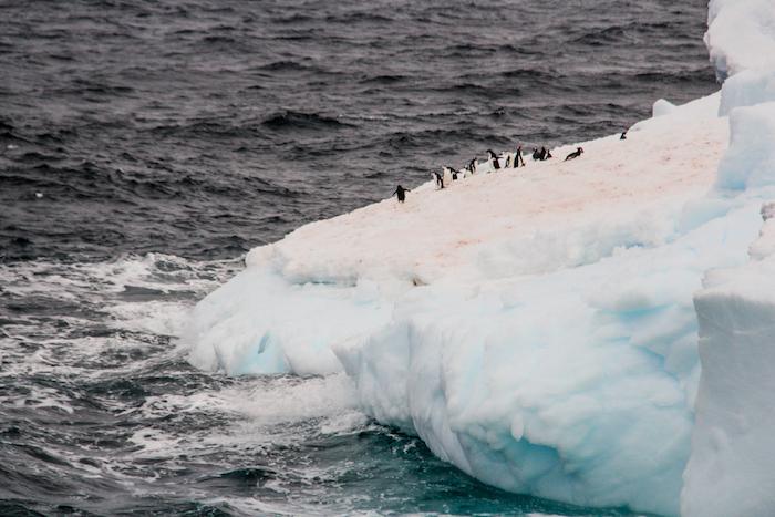 Brown Bluff Eisberg mit Pinguinen