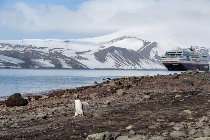 Pinguin auf Deception Island MS Midnatsol